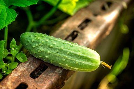 Nálev na uhorky