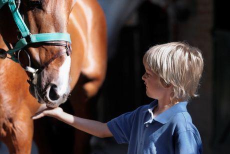 Ako sa liečia deti na chrbte koňa?