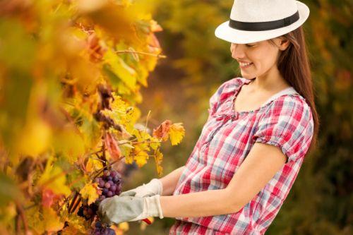 5 krokov k príprave záhrady na zimu