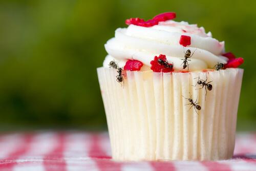 mravce v domacnosti