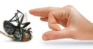 Ako bojovať s hmyzom