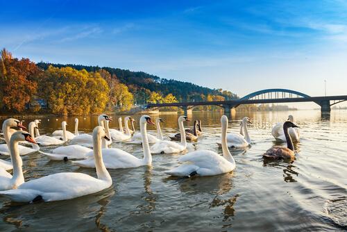 Pieštany, výlety s deťmi, Slovensko