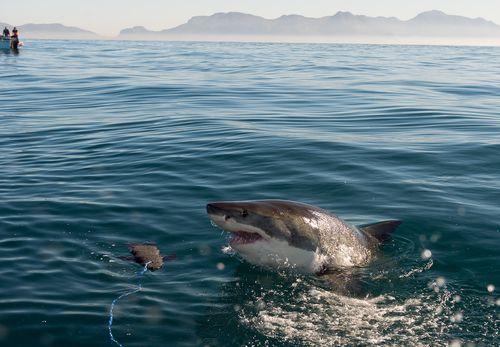 Žraloky zabili na Jadrane 9 ľudí. Všetci boli turisti