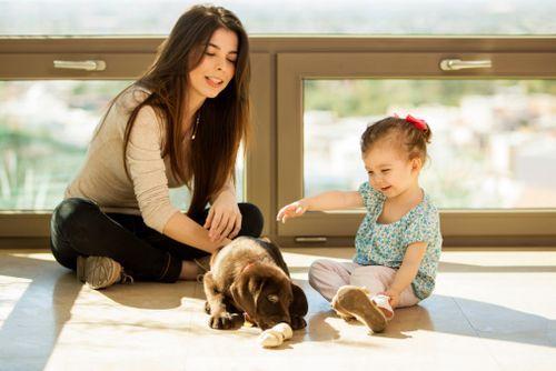 Čo zvážiť pri výbere psa do rodiny