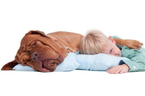 Ako vybrať psa k deťom