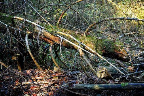 Pád stromu zabil 14-ročného žiaka základnej školy