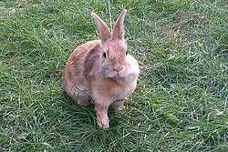 Akú klietku pre zajaca?