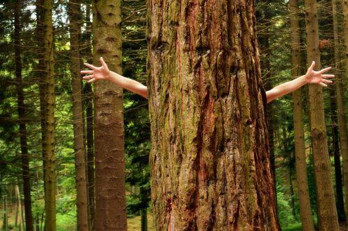 5 tipov, ako začať žiť zeleno